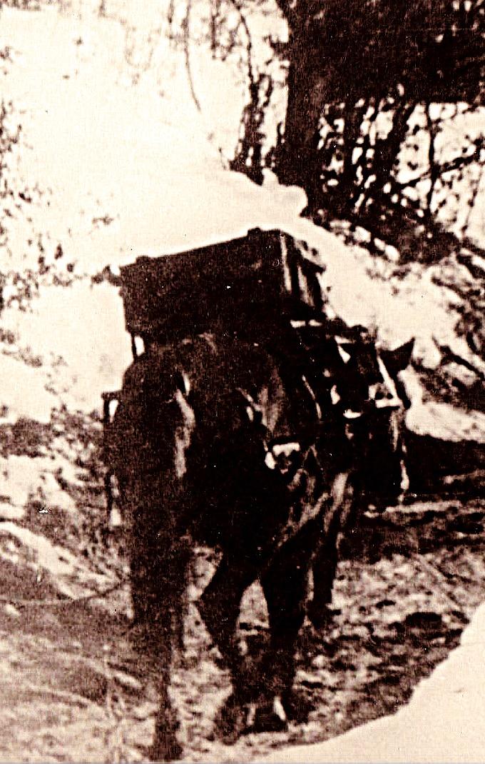 Calul-aliatul soldatuluiu